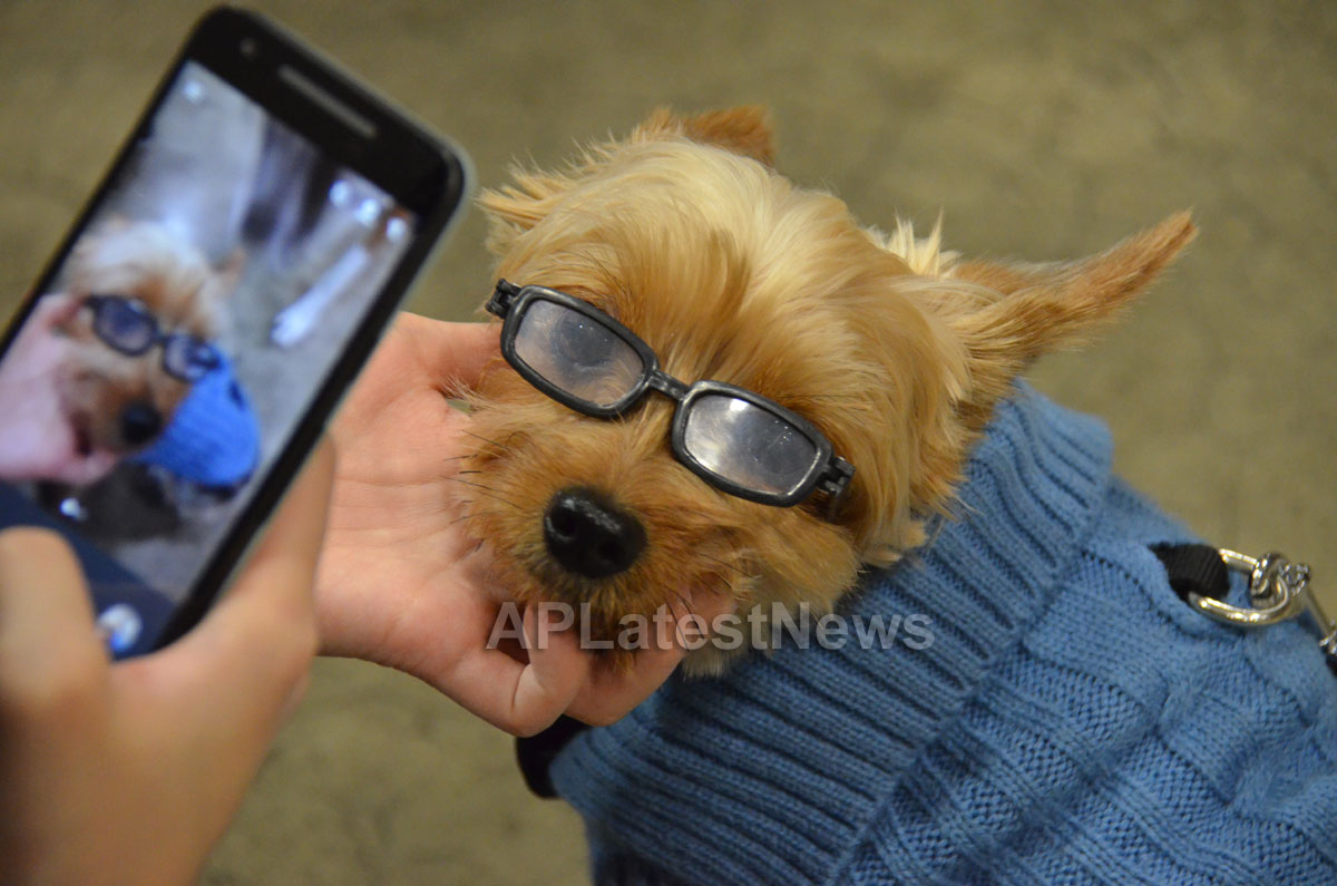 Annual Bay Area Pet Expo at Santa Clara County Fairgrounds, San Jose, CA, USA - Picture 3